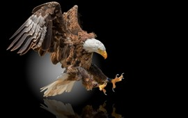 Preview wallpaper Eagle flight, wings, black background