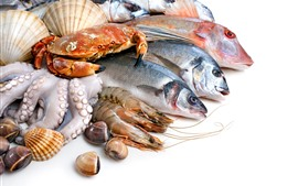 Preview wallpaper Fish, crab, shrimp, seashell, white background