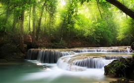 Preview wallpaper Forest, stream, water, green