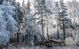 Preview wallpaper Frost, snow, trees, winter