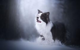 Cão peludo, olhar, neve, nebuloso