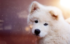 Preview wallpaper Furry puppy look back, glare