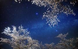 Night, tree, flowers, sky, stars
