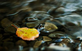 Preview wallpaper One yellow leaf, water