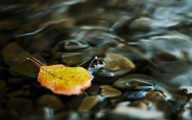 미리보기 배경 화면 하나의 노란 잎, 물