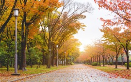 Preview wallpaper Park, road, trees, yellow leaves, autumn