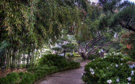 Парк, деревья, бамбук