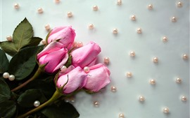 Preview wallpaper Pink roses, water droplets, beads