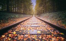 Ferrovia, folhas amarelas, árvores, outono