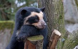 Urso tristeza