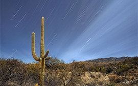 Preview wallpaper Saguaro, bushes, desert, meteor