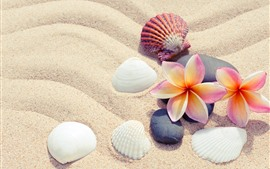 Preview wallpaper Sands, plumeria, seashells