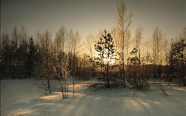 Preview wallpaper Snow, trees, sun rays, dusk, winter