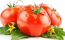 Três tomates, folhas verdes, flores