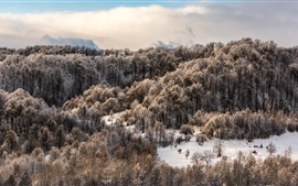 Preview wallpaper Trees, forest, snow, clouds, winter