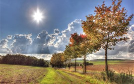 Arbres, herbe, nuages, soleil, automne