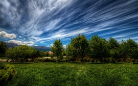 Trees, grass, houses, blue sky, clouds