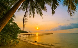 Tropical, summer, beach, sea, palm trees, pier, sunset