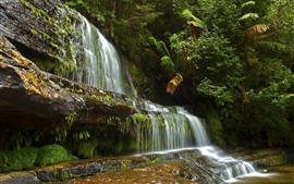 Waterfall, plants, nature