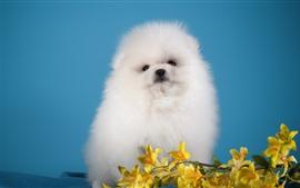 Cachorro peludo blanco, fondo negro, flores amarillas