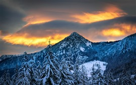 Inverno, montanhas, árvores, neve, crepúsculo
