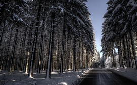Preview wallpaper Winter, snow, road, trees, sun rays