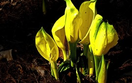 Preview wallpaper Yellow flowers, ground