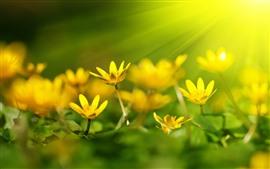 Flores amarelas, luz do sol