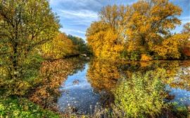 Outono bonito, árvores douradas, lagoa