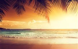 Belo pôr do sol, palmeira deixa, praia, mar, tropical, verão