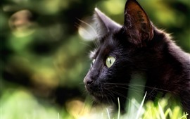 Preview wallpaper Black cat, look, eyes, hazy background