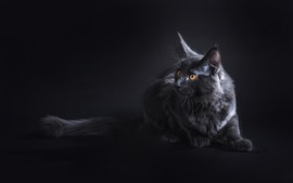Preview wallpaper Black cat look, yellow eyes, darkness