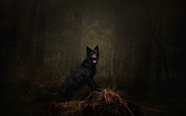 Preview wallpaper Black dog, forest, forest, darkness
