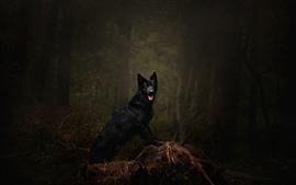 Perro negro, bosque, bosque, oscuridad
