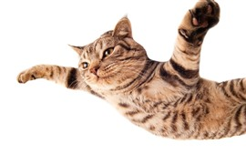 Cat flying, paws as wings, white background