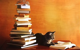 Preview wallpaper Cat study hard, reading book