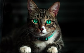 Preview wallpaper Cute cat look at you, face, green eyes