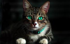Gato bonito olhar para você, cara, olhos verdes