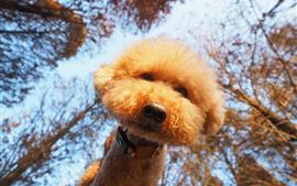 Cão peludo bonito, olhe, árvores