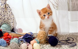 Preview wallpaper Cute kitten and wool balls