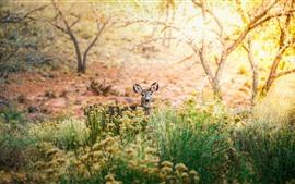 Preview wallpaper Deer, wildflowers, trees