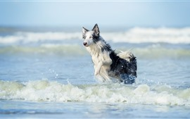 Preview wallpaper Dog walking on the beach, water, sea, waves