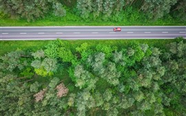 Forest, trees, top view, road, car