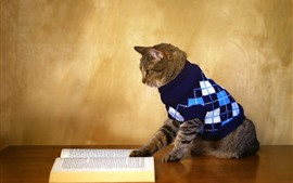 Preview wallpaper Funny animal, cat reading book, sweater