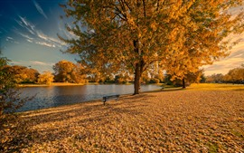 Preview wallpaper Golden autumn, trees, leaves, bench, park, lake