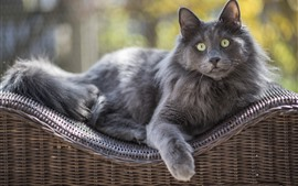 Preview wallpaper Gray cat, green eyes, rest