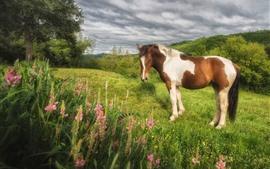 Cavalo, grama, flores, nuvens, natureza