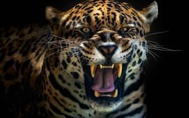 Rugido de jaguar, cara, dientes