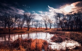 Nature, puddle, water, grass, trees, dusk