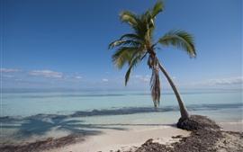 One palm tree, sea, beach